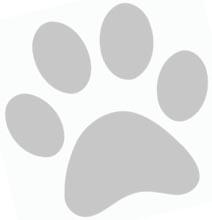 whitepawprint.jpg